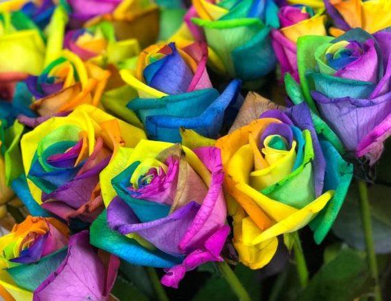 Роза Радуга 2