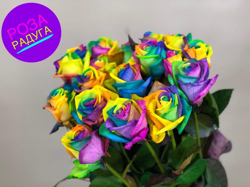 Роза Радуга изображение 1