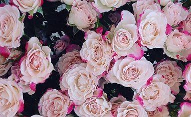 Роза Рефлекс 2