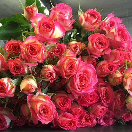 Роза Саммер Дэнс изображение 2