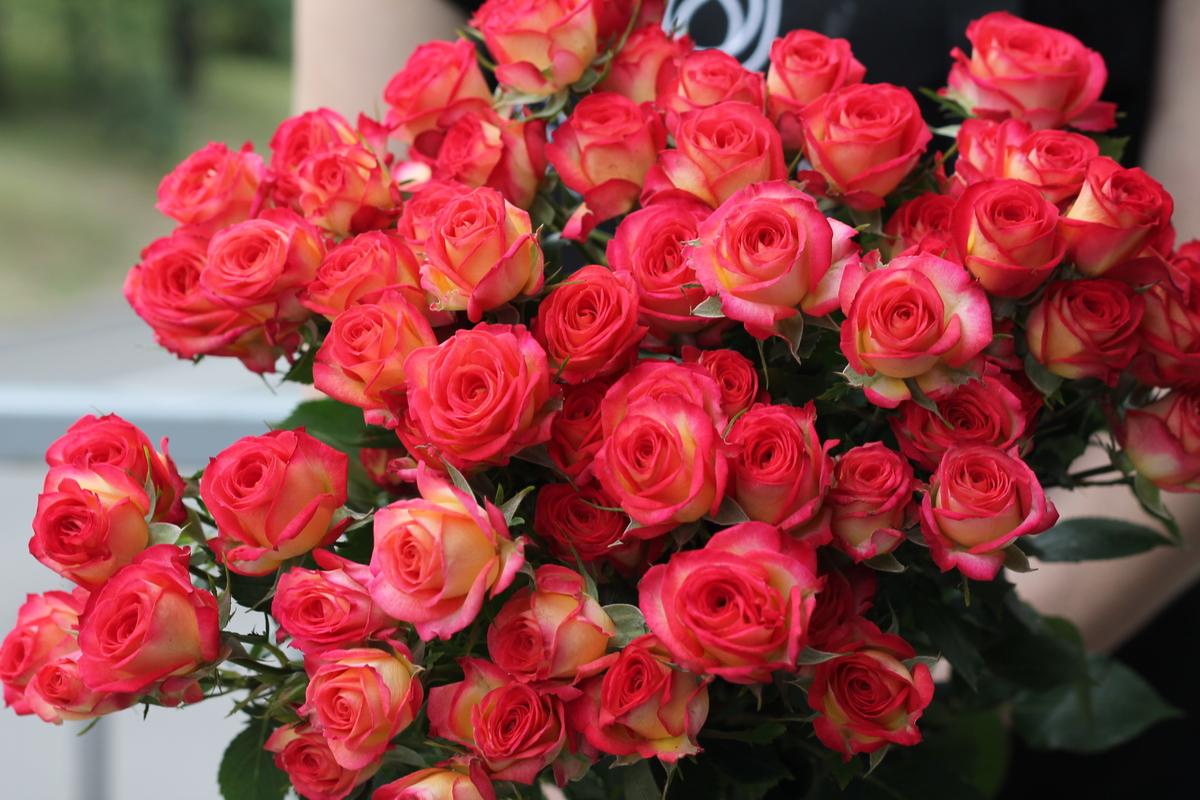 Роза Саммер Дэнс изображение 3