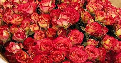 Роза Саммер Дэнс 4