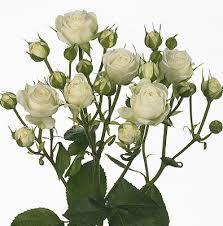 Роза Сноу Бабл 4