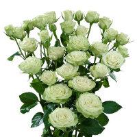 Роза Сноу Бабл 2