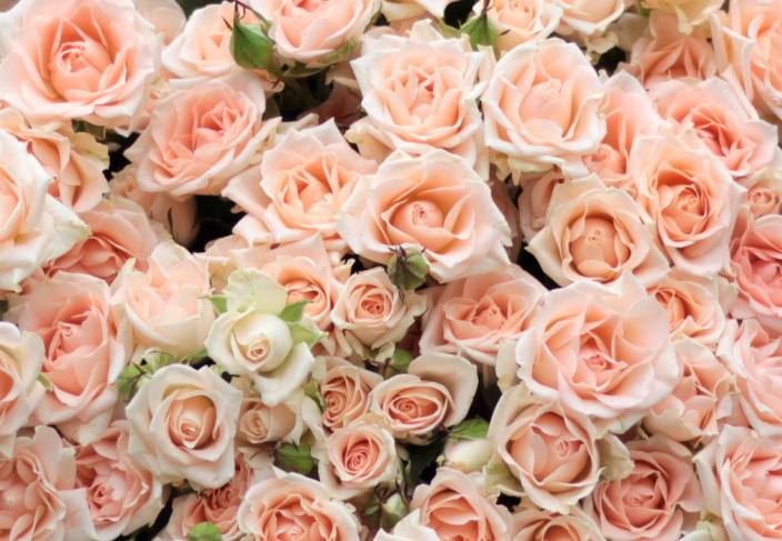 Роза Свит Сара 1
