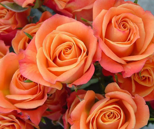 Роза Херо 2
