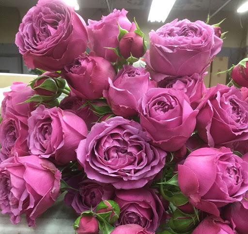 Роза Хот Пинк Лейс изображение 4