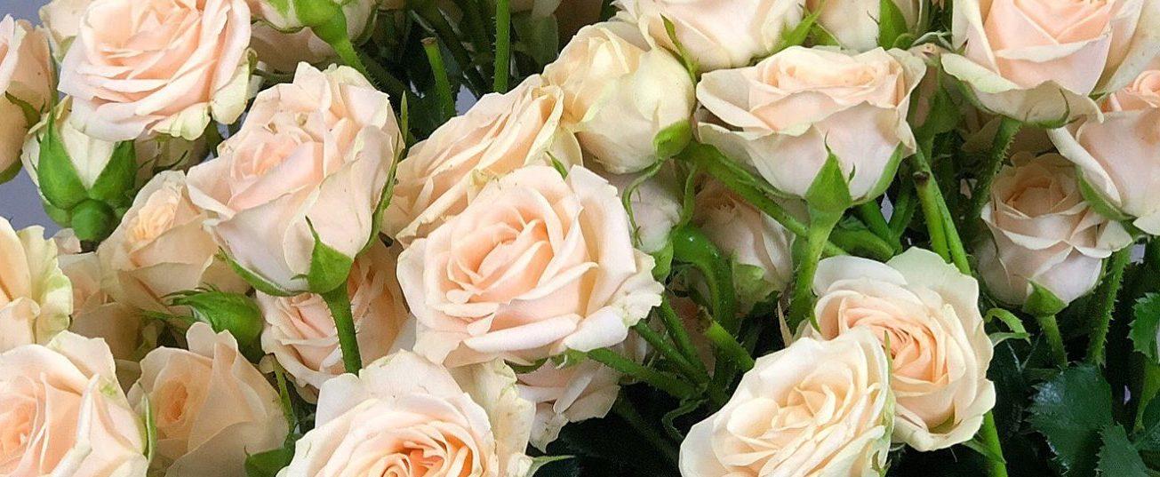 Роза Яна 1