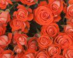 Роза Задик