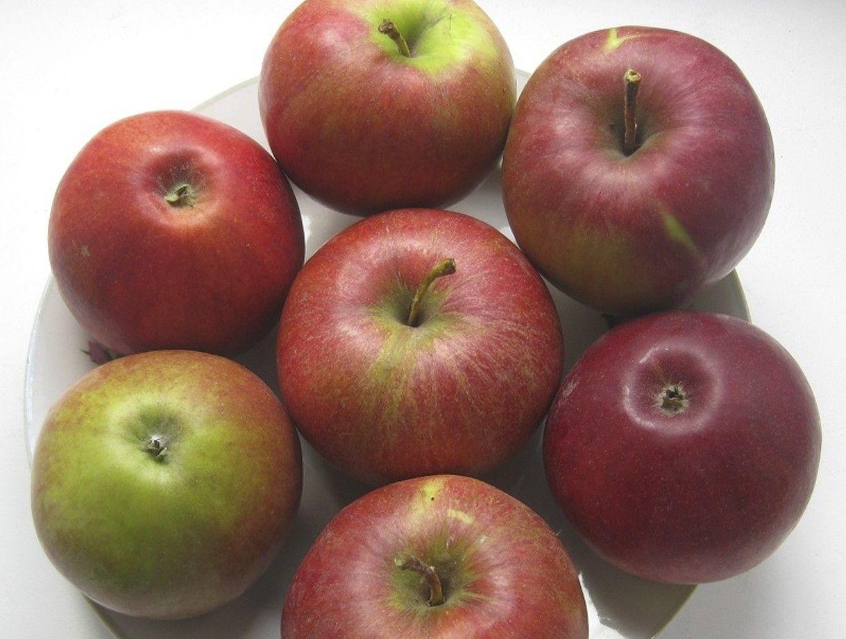 Яблоня Поспех изображение 2