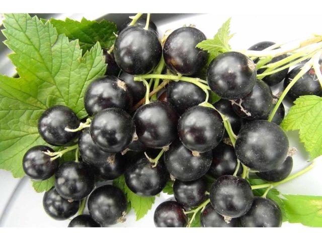 Смородина черная Деликатес 4