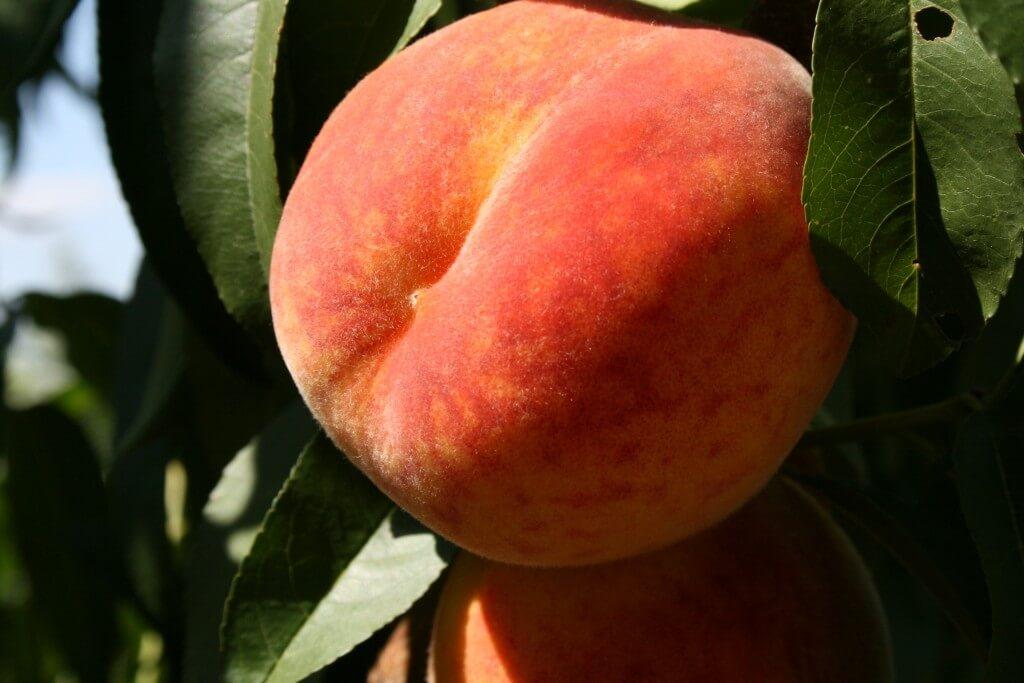 Персик Инка 4